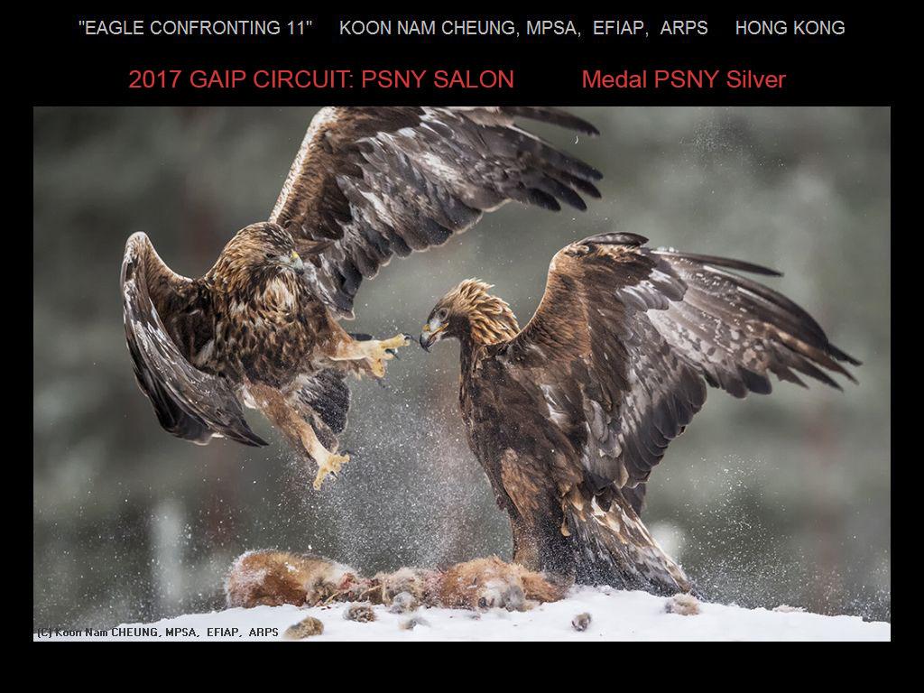 """敬请欣赏""""纽约摄影学会国际联赛""""自然组获奖作品_图1-4"""
