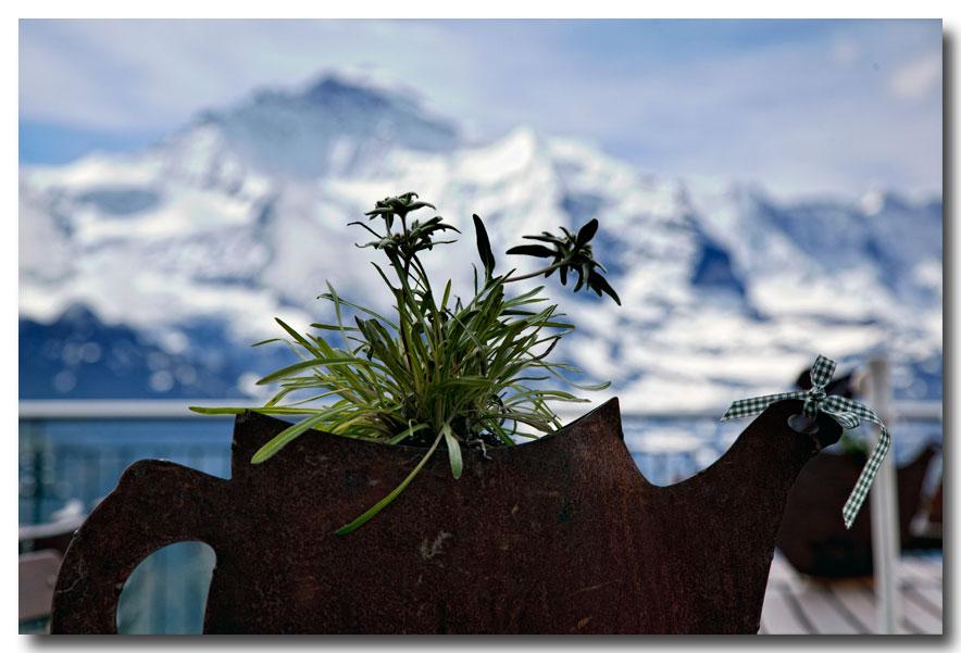 《酒一船摄影》:瑞士行-小镇文根少女峰_图1-5