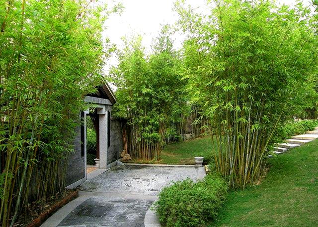 """香港公園之_""""嶺南之風"""" 2_圖1-11"""