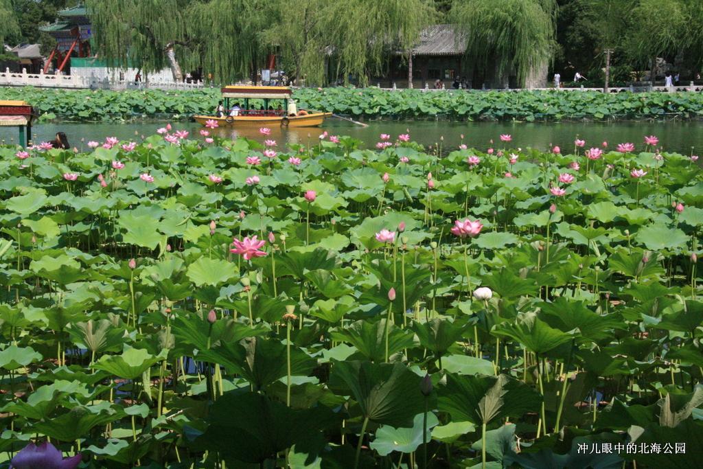 北京城中一个让你情怀萦绕的地方_图1-22