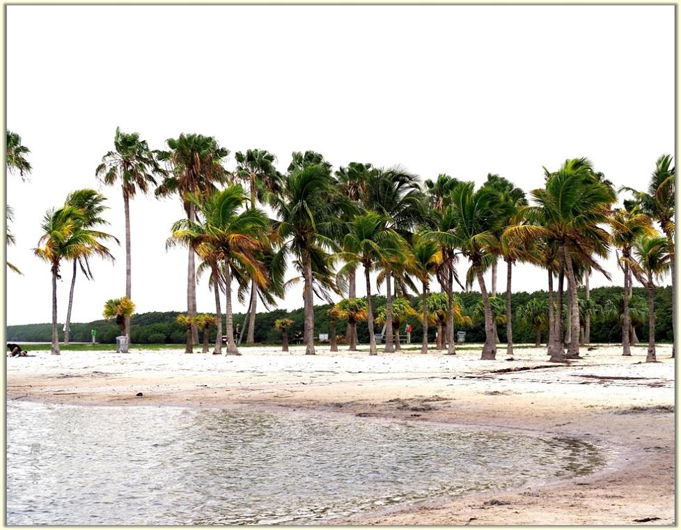 旅游城市--迈阿密_图1-8