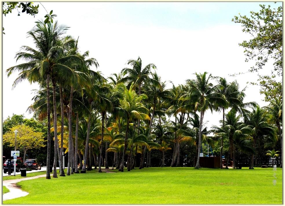 旅游城市--迈阿密_图1-13