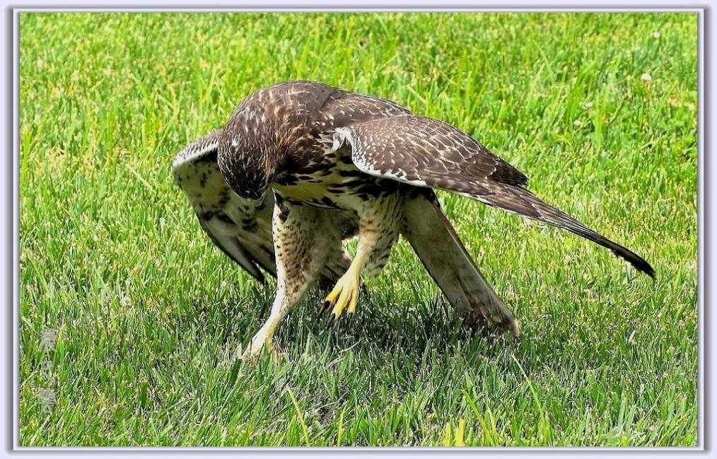 小鹰练翅_图1-6