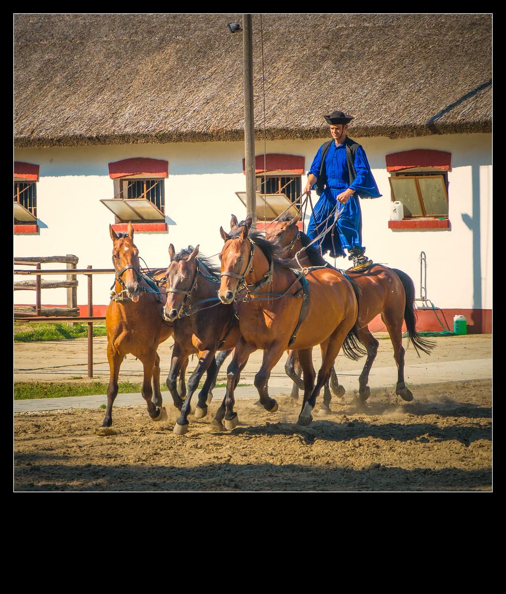 那些匈牙利牧场的人和事_图1-6