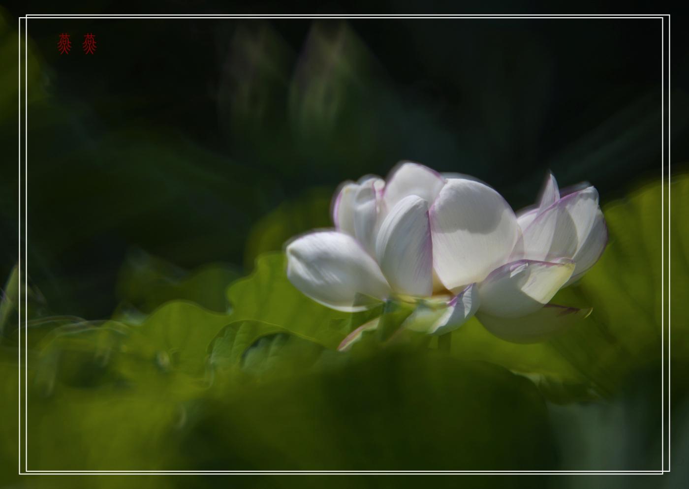 荷香_图1-2