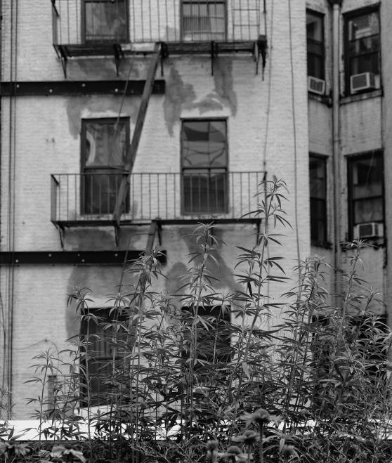 纽约街拍【心想事成】_图1-5