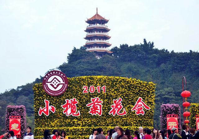 2011 小榄菊花_图1-2