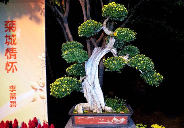 2011 小榄菊花_图1-19