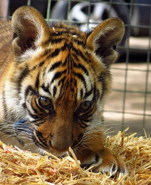 法国拉巴勒米动物园   1_图1-1
