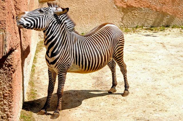 法国拉巴勒米动物园   1_图1-2