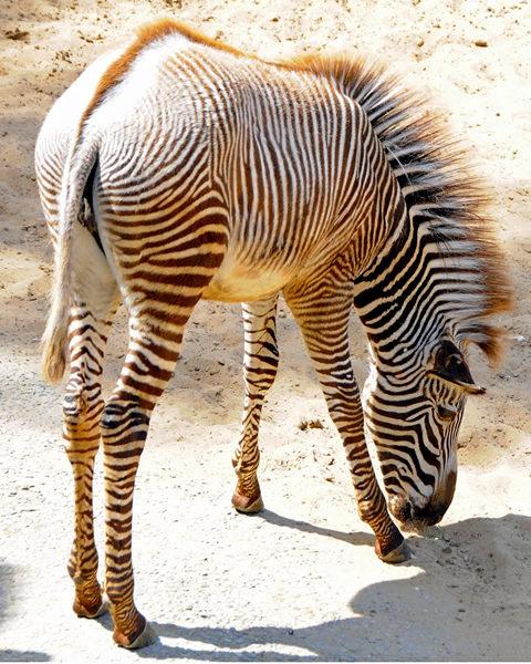法国拉巴勒米动物园   1_图1-3