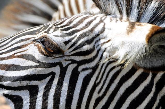 法国拉巴勒米动物园   1_图1-4