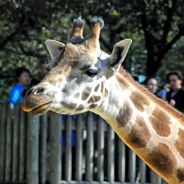 法国拉巴勒米动物园   1_图1-5