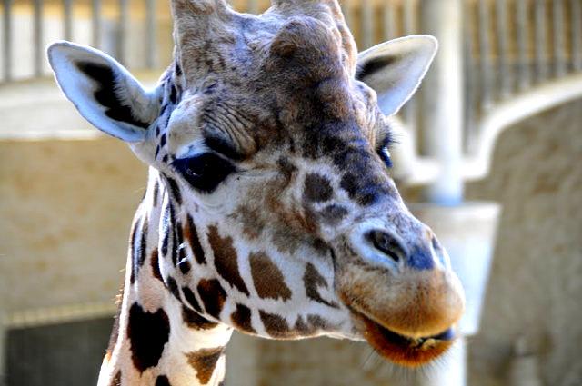 法国拉巴勒米动物园   1_图1-6