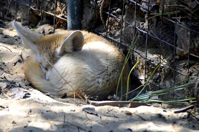 法国拉巴勒米动物园   1_图1-7
