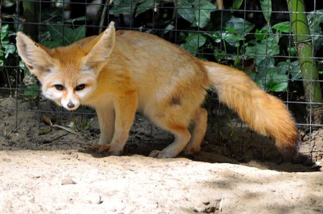 法国拉巴勒米动物园   1_图1-8