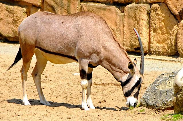 法国拉巴勒米动物园   1_图1-9