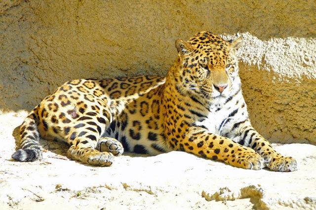 法国拉巴勒米动物园   1_图1-12