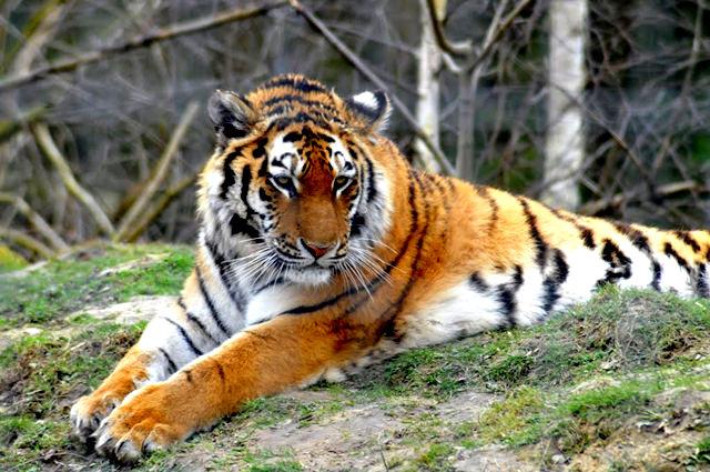 法国拉巴勒米动物园   1_图1-15