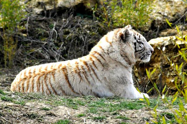 法国拉巴勒米动物园   1_图1-17