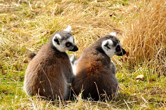 法国拉巴勒米动物园   1_图1-23
