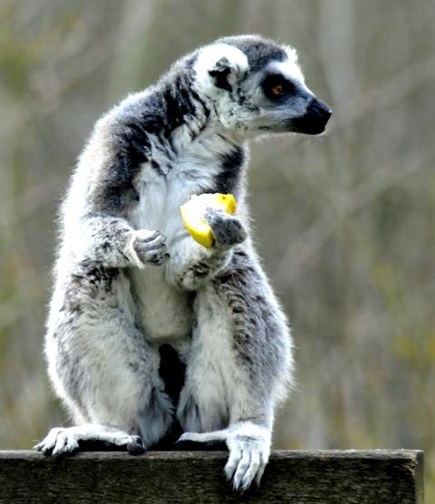 法国拉巴勒米动物园   1_图1-25