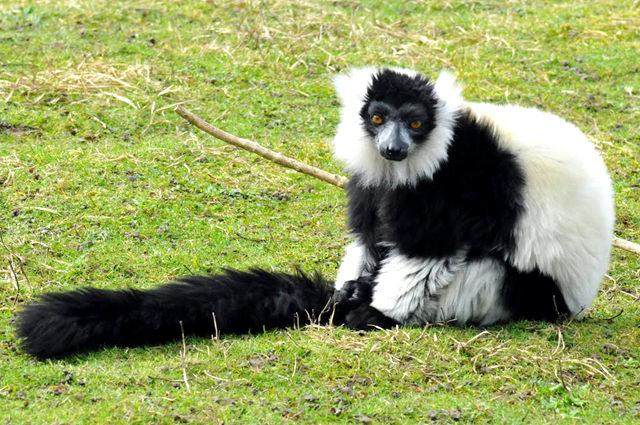 法国拉巴勒米动物园   1_图1-26