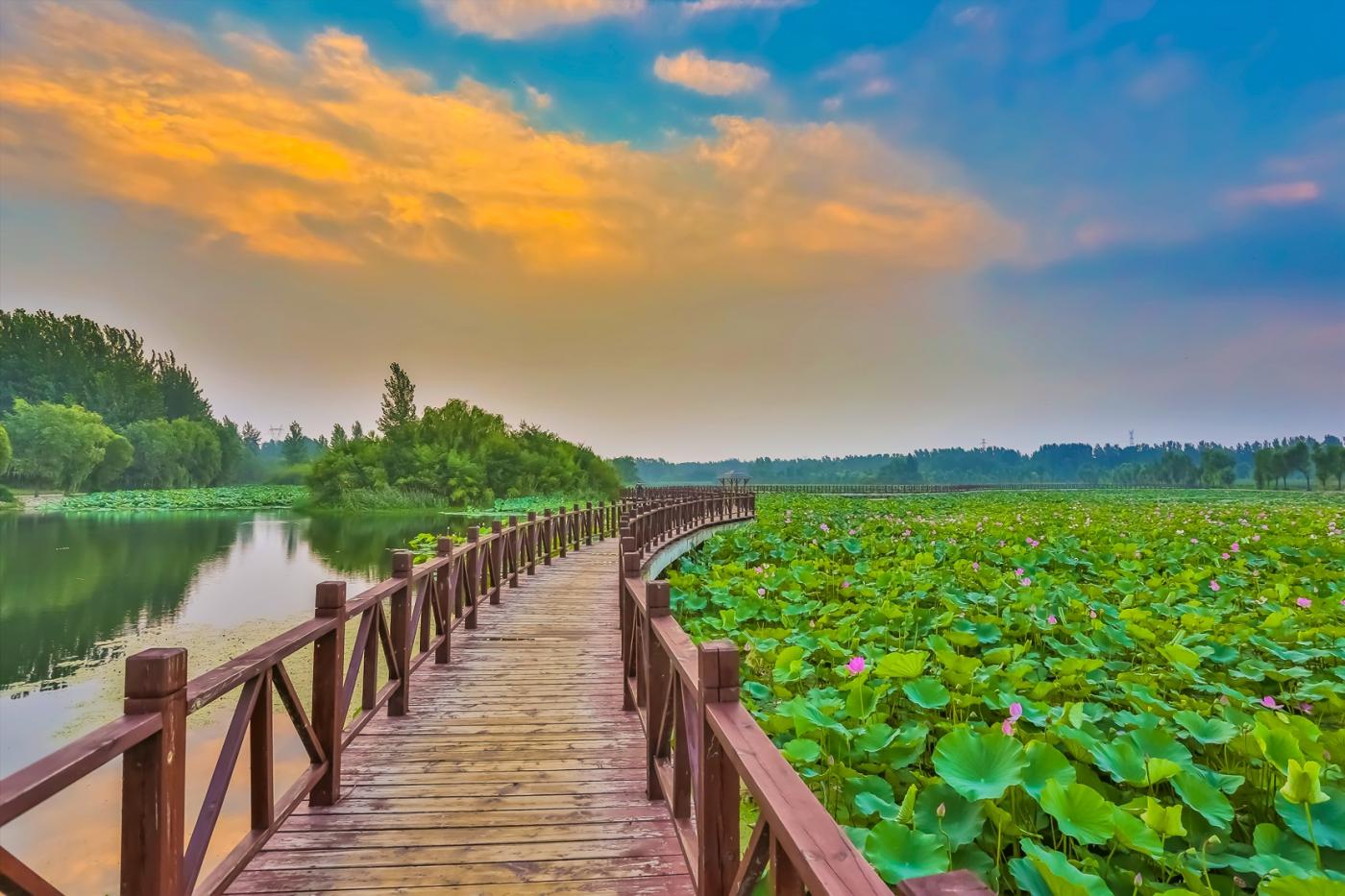 早晨的祥云印照下的临沂黄山武河湿地红荷园_图1-11