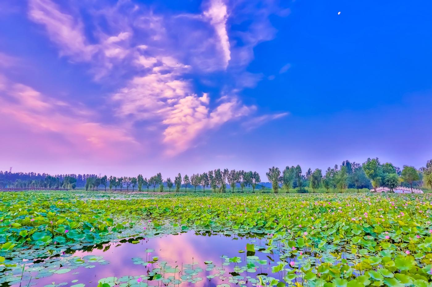 早晨的祥云印照下的临沂黄山武河湿地红荷园_图1-15