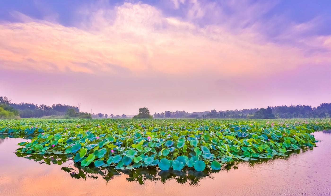 早晨的祥云印照下的临沂黄山武河湿地红荷园_图1-16