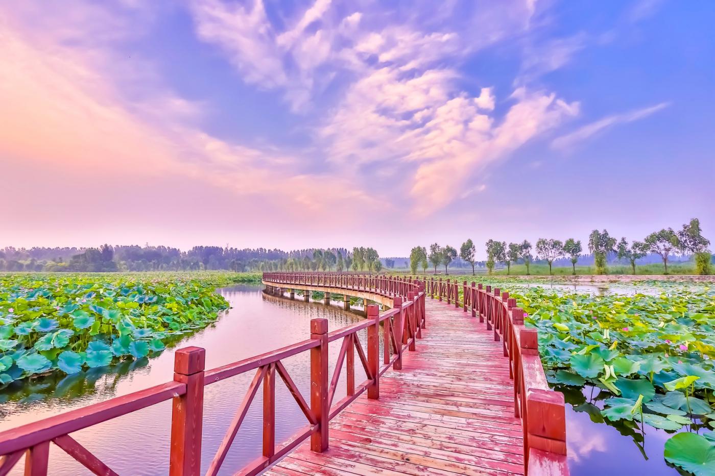 早晨的祥云印照下的临沂黄山武河湿地红荷园_图1-17