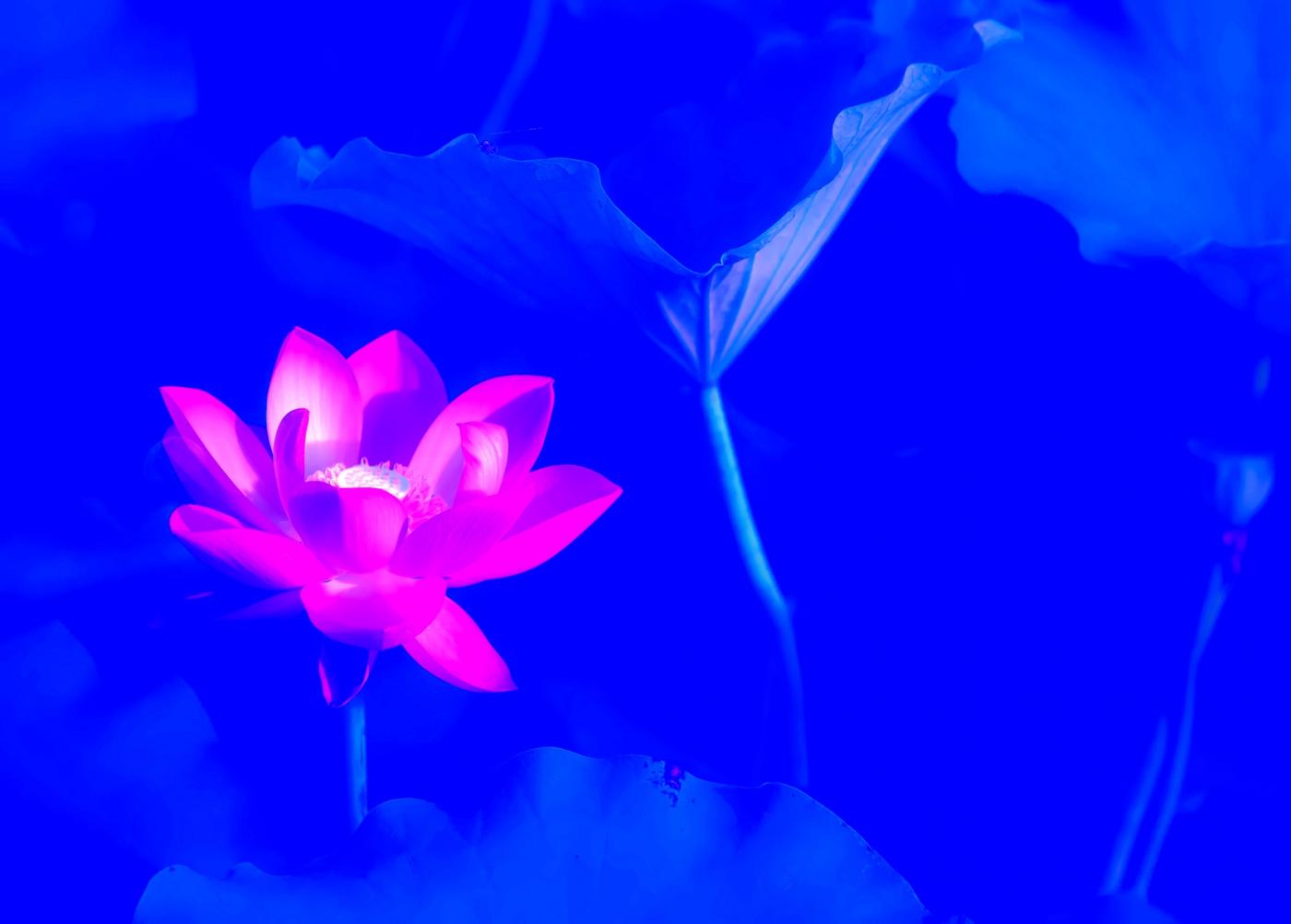 尝试用多重曝光拍摄拍摄湿地红荷_图1-9