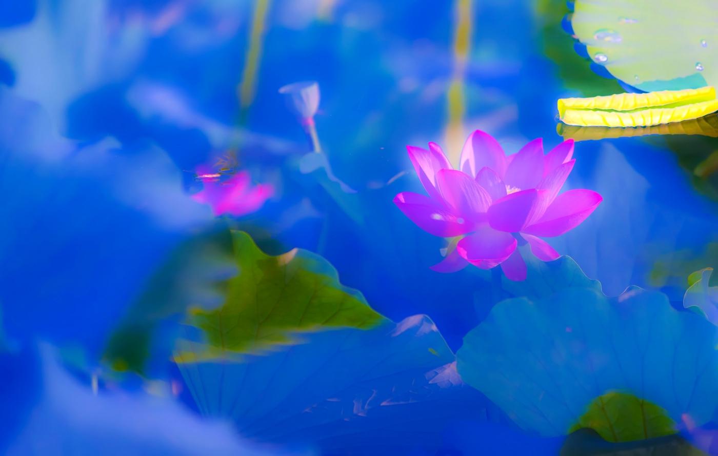 尝试用多重曝光拍摄拍摄湿地红荷_图1-8
