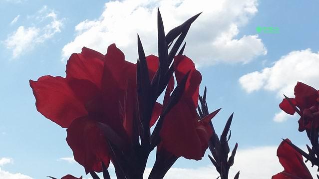 【青竹凌云】幸福在你的心怀(原创诗歌摄影)_图1-3
