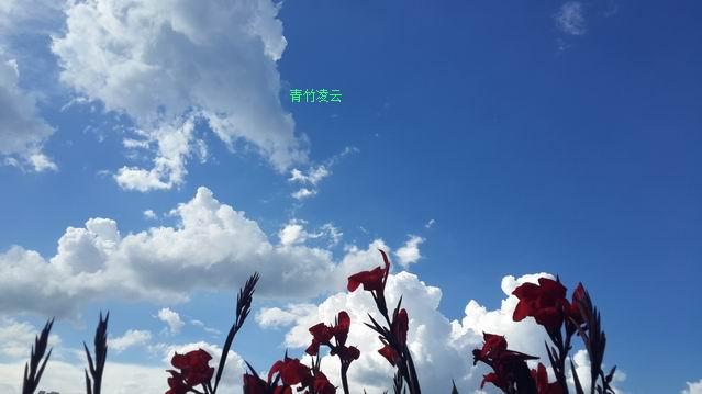 【青竹凌云】幸福在你的心怀(原创诗歌摄影)_图1-5