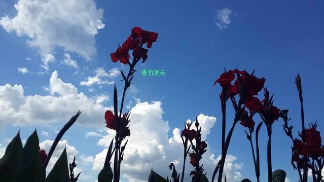【青竹凌云】幸福在你的心怀(原创诗歌摄影)_图1-6