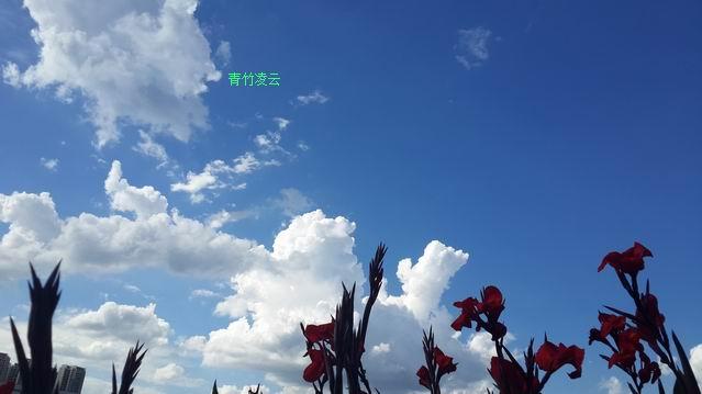 【青竹凌云】幸福在你的心怀(原创诗歌摄影)_图1-8