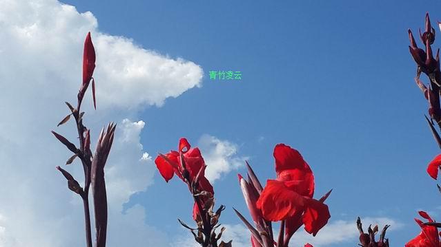 【青竹凌云】幸福在你的心怀(原创诗歌摄影)_图1-7