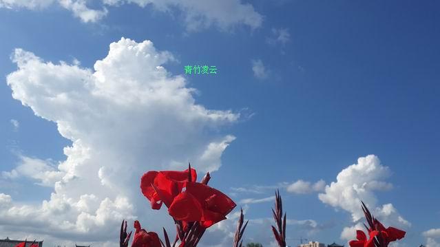 【青竹凌云】幸福在你的心怀(原创诗歌摄影)_图1-9