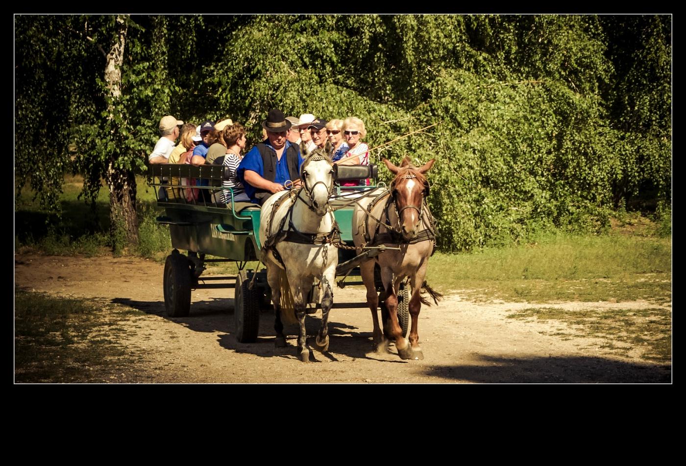 喝酒,做马车,牧场的一天_图1-8