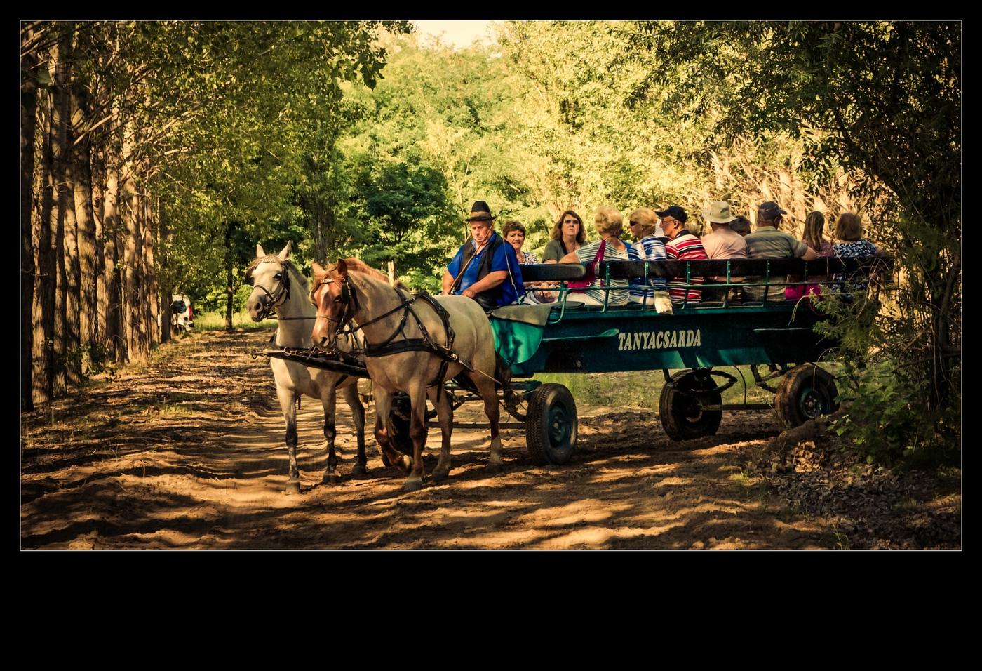 喝酒,做马车,牧场的一天_图1-7