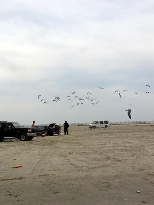 【原创】词牌渔歌子海鸥_图1-2
