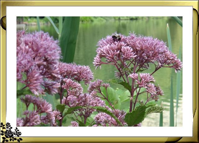 蜜蜂恋花,依依不舍