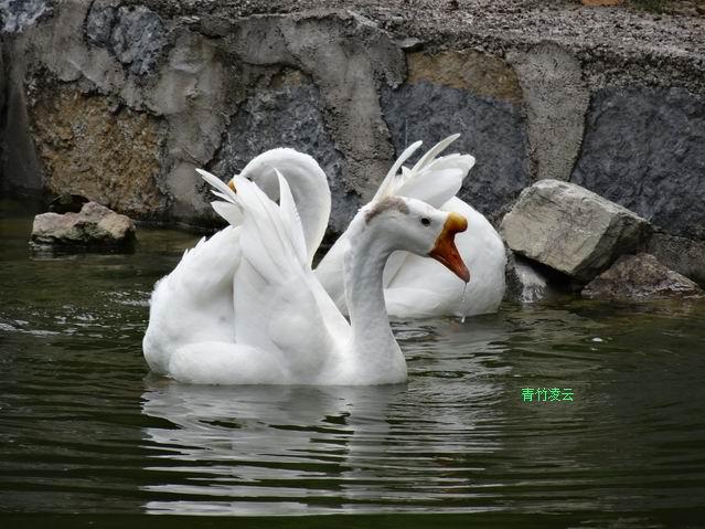 【青竹凌云】有你箫琴共婉(原创诗歌摄影)_图1-7