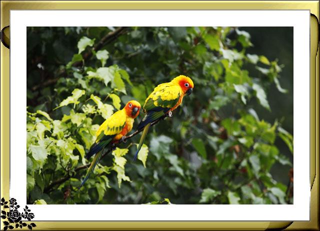 鹦鹉——8月27日摄于皇后区动