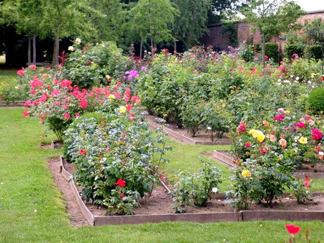 史岛植物园玫瑰_图1-36