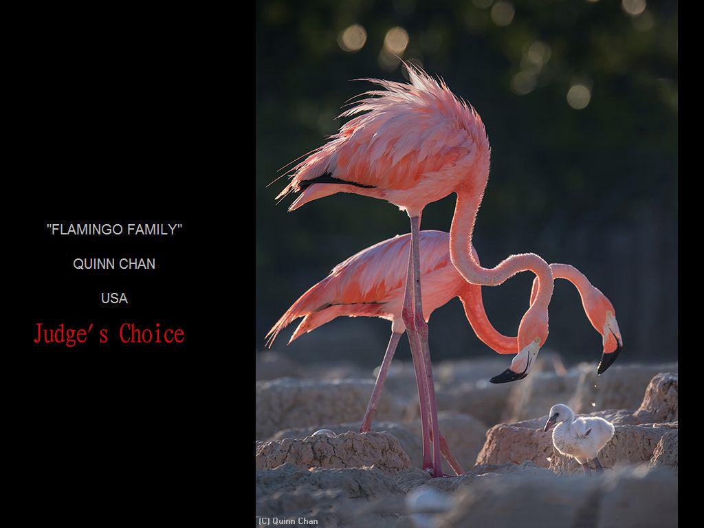 纽约摄影学会2017年沙龍數碼彩色自由題組獲獎作品_图1-11