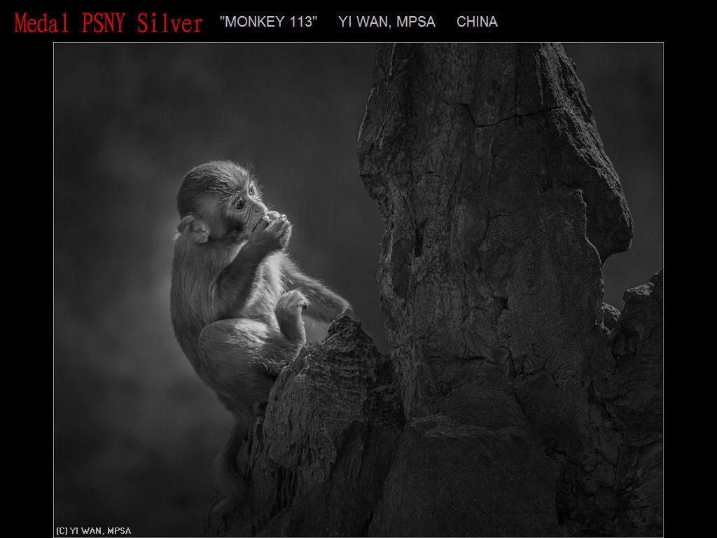 纽约摄影学会2017年沙龍數碼單色自由題組獲獎作品_图1-3