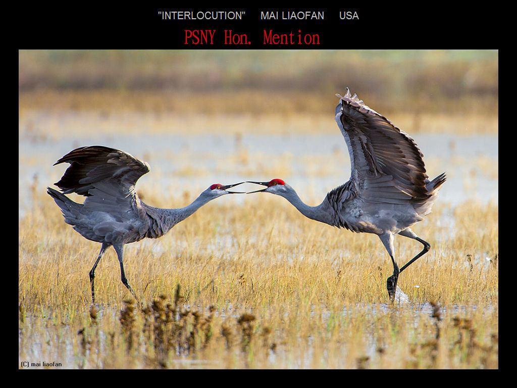 纽约摄影学会2017年沙龍數碼自然組獲獎作品_图1-30