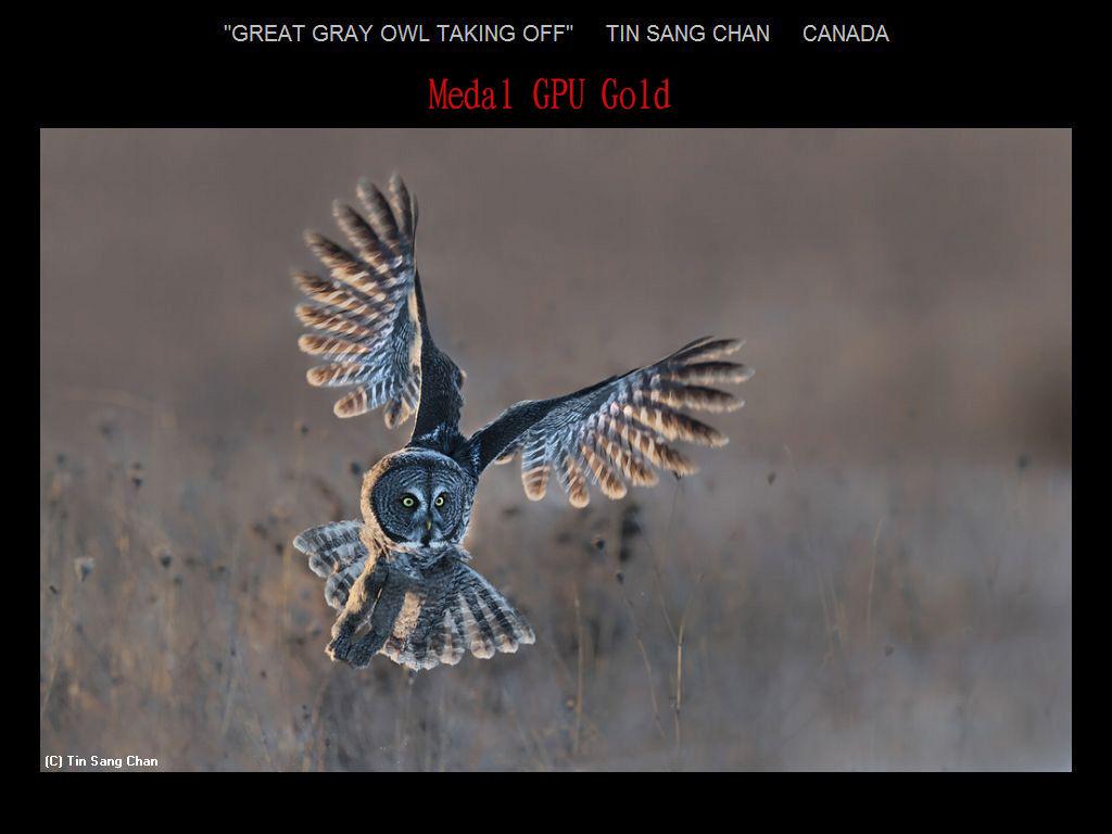 纽约摄影学会2017年沙龍數碼自然組獲獎作品_图1-27